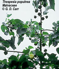 Milo Plant Uses