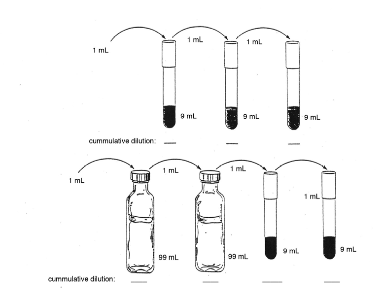 Dilution Techniques And Calculations