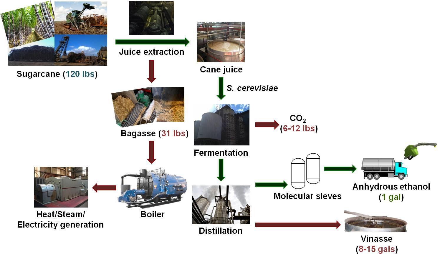 Bioenergy Research Group