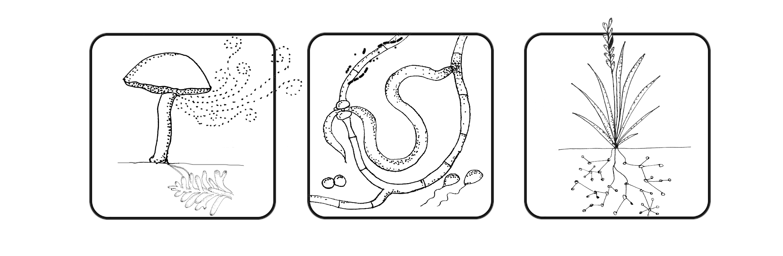 Soil Microbial Ecology | Nguyen Lab @ UH Mānoa | Resources